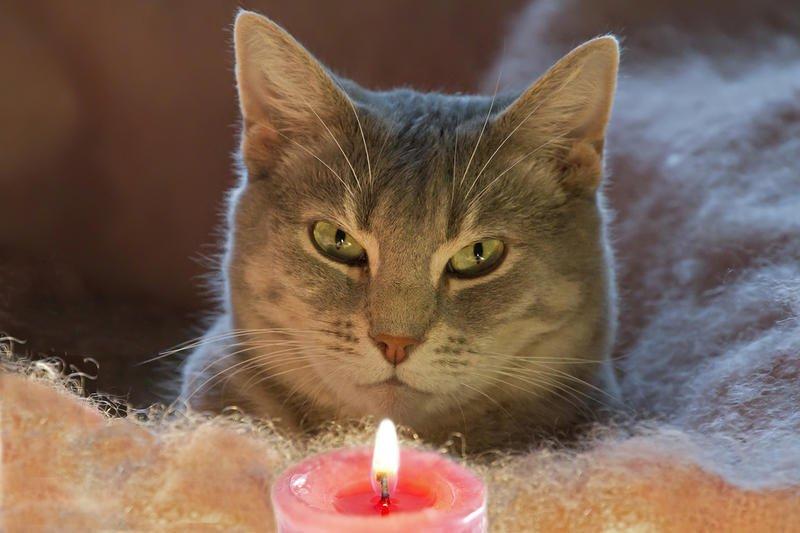 aggressive cat behaviour towards other cats